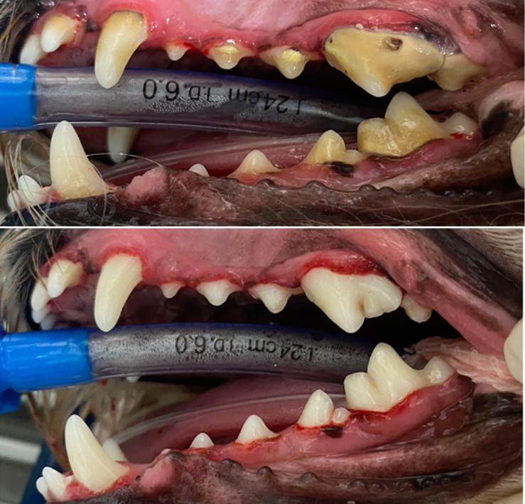 Dental1_FINAL